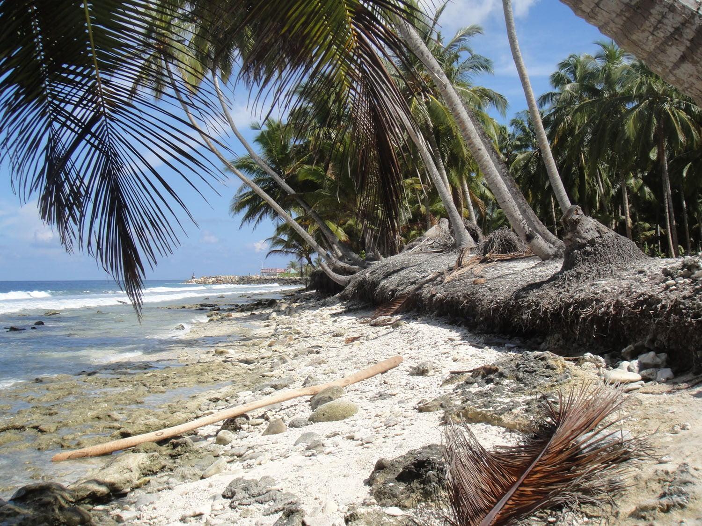 Kustbescherming Maldiven